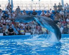 Дельфинарий Сочи Парка - время работы и стоимость билетов
